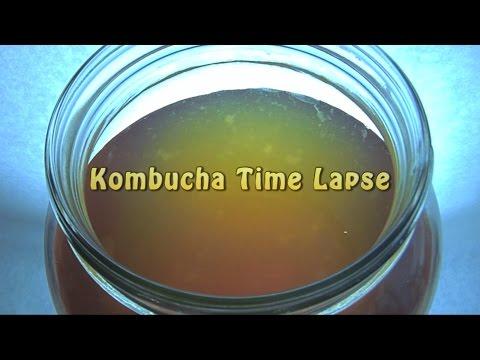 Kombucha Time Lapse