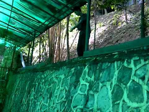 10 feet wall climb and jump