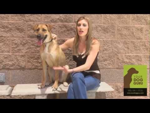 Phoenix Dog Training - Testimonial - Brigitte Lovell & Cimba