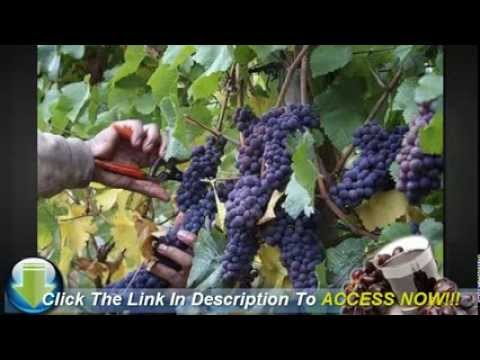 The Best Types of Grapes for Growing