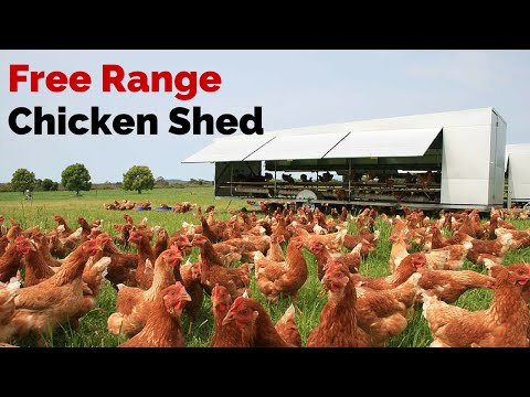 Free Range Chicken Shed