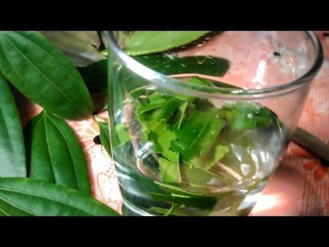 How to make tea with bay leaves -  तैयार कैसे करें तेज पत्ता चाय