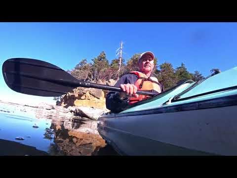 Shark attacks kayak