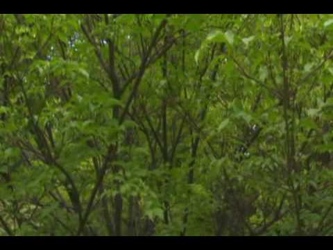 University plans to construct arboretum