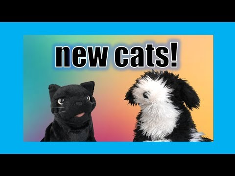 New Cats! George the Self Esteem Cat