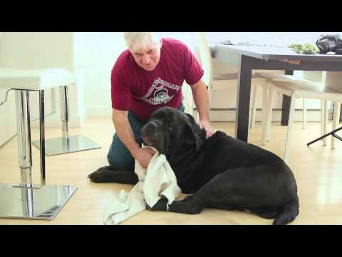 How to Stop Heavy Breathing in Dogs Because of Storms : Loving Your Dog