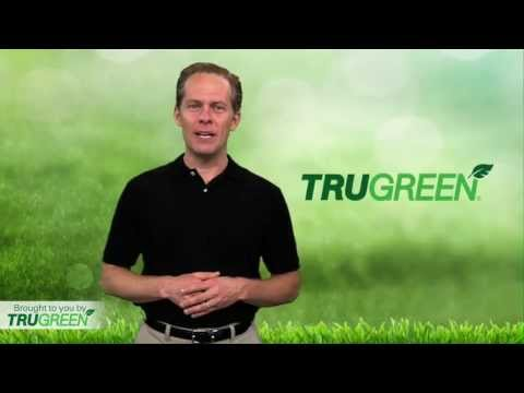 Lawn Care | Watering and Maintaining a Healthy, Green Lawn