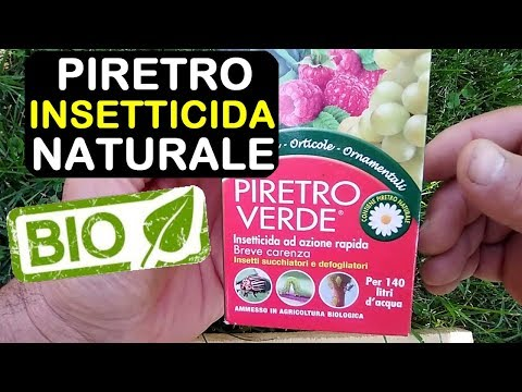 PIRETRO INSETTICIDA NATURALE