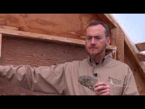Paper Wasp Removal | From the Ground Up