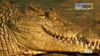 National Geographic How Big Can It Get Croczilla HDTV