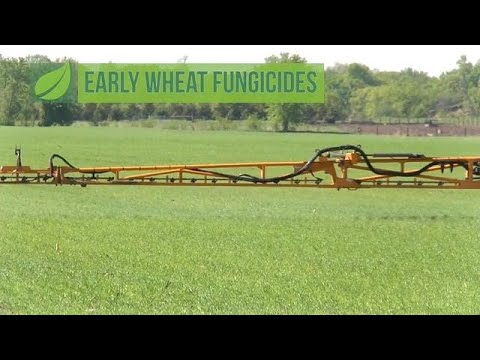 Early Wheat Fungicides #1048 (Air Date 5-6-18)