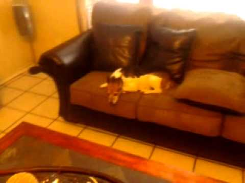 How to take your dog off the couch (funny)