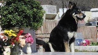 Dog Stands Guard Over Deceased Owner