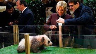 Brigitte Macron gets a fright as she baptises growling baby panda
