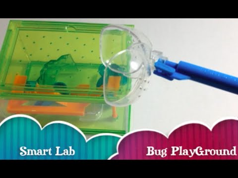 How to Make Bug Playground Aquarium Cage For Bug and Insects