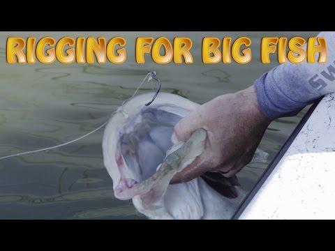 How to Rig for big Snook and Tarpon, Big Bait Big Fish