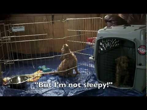Puppy PhD - First Night