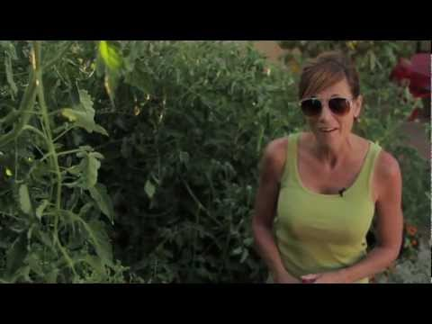 How to get Huge Tomato Plants - Easy, Cheap Tomato Fertilizing Tips