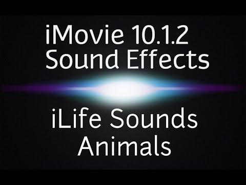 iMovie 10.1.2 Sound Effects | iLife Animals (Free Sound Effects)
