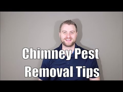 What's Chirping In My Chimney? - Chimney Pest Removal Tips