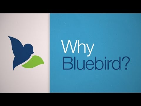Bluebird by American Express is a financial account with flexible features and management tools.