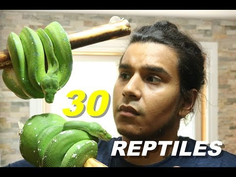Cleaning All My Pets Summer 2017| All My Reptiles Vlog 🐍🐍🐍