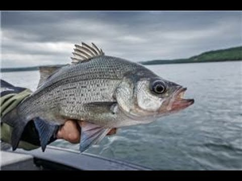 Fishing Utah Lake (ICE OFF)