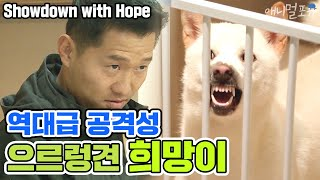 Showdown with extremely aggressive Jindo dog 'Hee mang'[Dogs are incredible][It like a Cesar`s show]