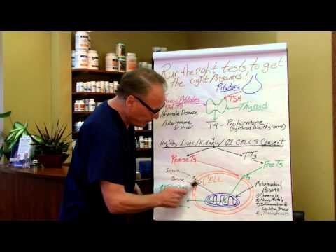 Hypothyroidism and Chronic Fatigue with Dr. Greg Fors - Pain and Brain Healing Center 55449