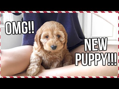 FLYING HOME TO GET MY NEW PUPPY!! | Vlogmas Day 15