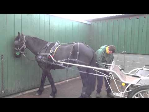 Putting a horse to by yourself - driving a single Friesian (Duke).