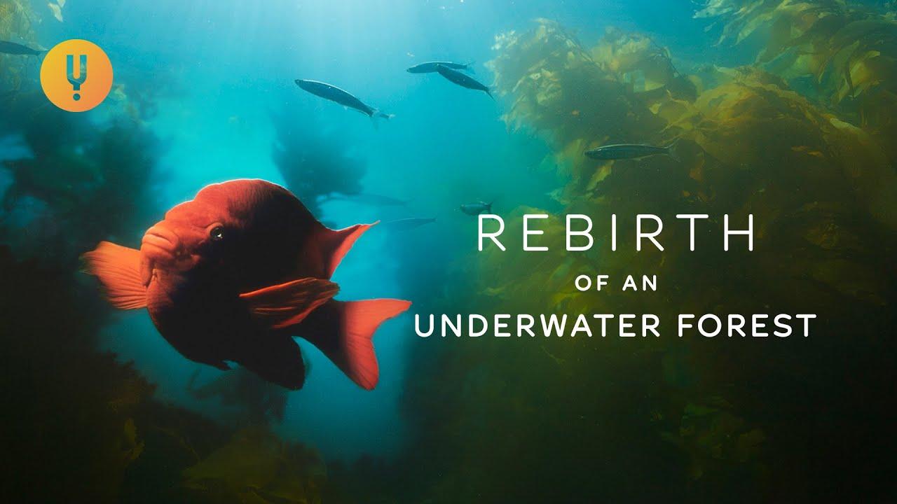 Rebirth of an Underwater Forest