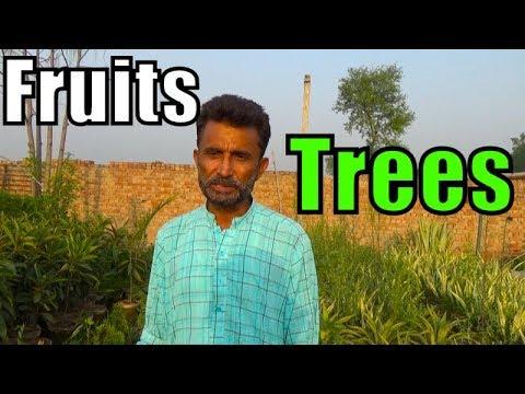 Fruits Trees !