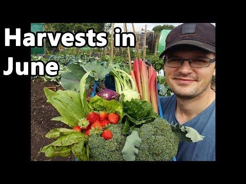 Harvests in June