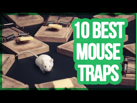 10 Best Mouse Traps 2018 | Best Way To Get Rid Of Mice