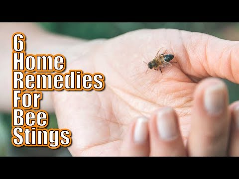 How to Treat Bee Stings at Home | 6 Natural Home Remedies for Treating Bee Stings