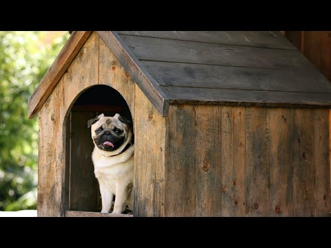 Mitre 10: How to build a dog kennel presented by Scott Cam