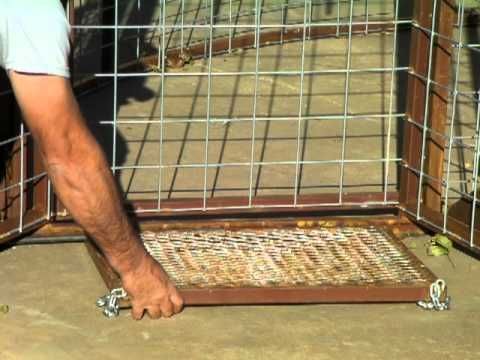Hog Trap Demonstration