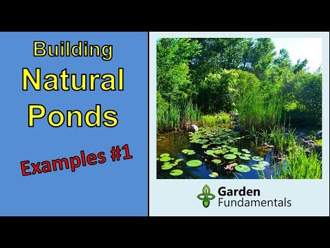 Build Your Own Natural Wildlife Pond without pumps, filters or chemicals