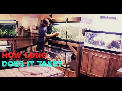I Clean 8 Of My 10 Fish Tanks Every Sunday!!!