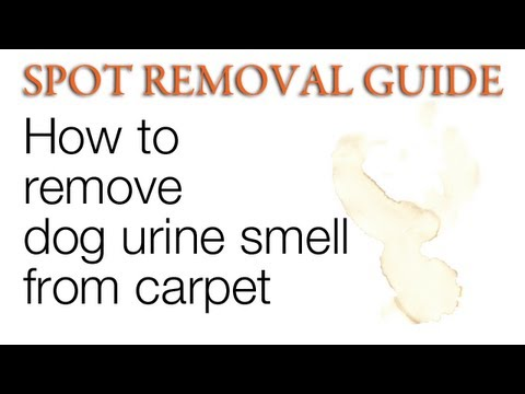 How to remove Dog Urine Smell from Carpet | Spot Removal Guide