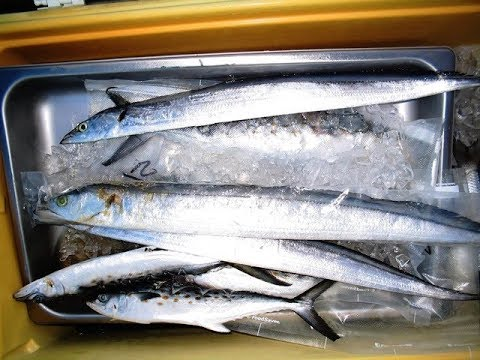 How I Like To Rig And Troll Ribbonfish For Giant King Mackerel