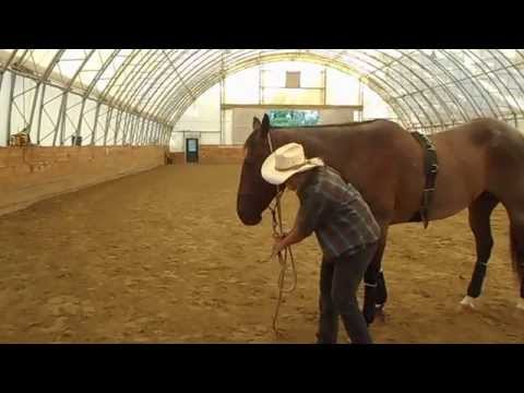 Teaching a horse to drop his head to be haltered or bridled