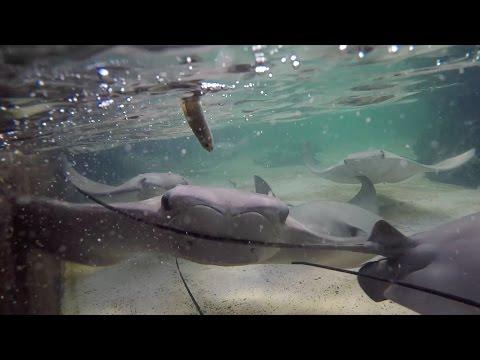 Day 10 seaworld orlando With Stingrays
