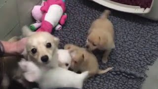 Mother Dog Elated After Reunited With Her Puppies