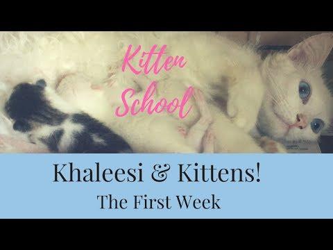 Khaleesi & Kittens! Caring for Newborn Kittens - Part 1