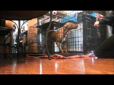 How-To: Calm a Dog Down to Let Out of Crate - Take the Lead K9 Training