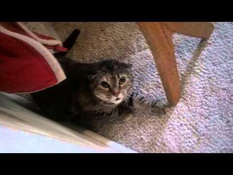 One Grumpy Cat