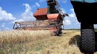 Комбайн Нива СК-5 уборка озимого ячменя сеяного весной. #СельхозТехника ТВ