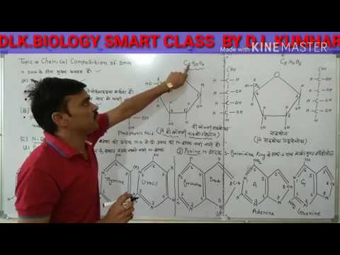 Chemical Composition Of Nucleic Acids / DNA & RNA In Hindi